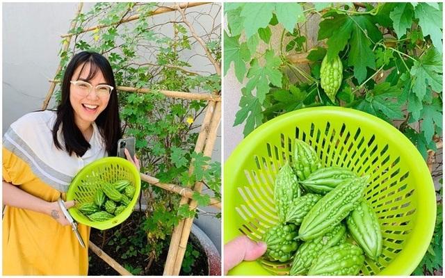 Vườn rau, trái cây xanh mướt mát của gia đình Hải Băng - Thành Đạt - 15