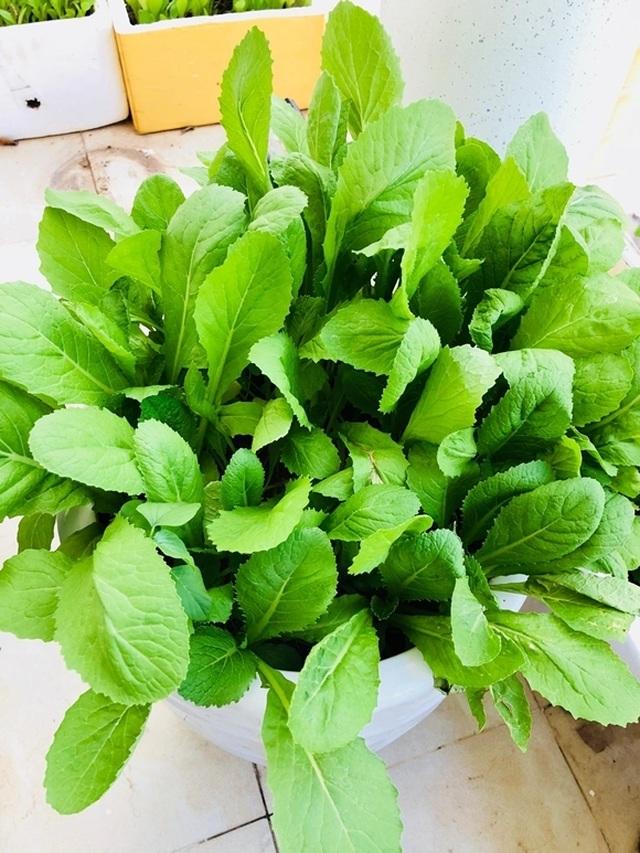 Vườn rau, trái cây xanh mướt mát của gia đình Hải Băng - Thành Đạt - 7