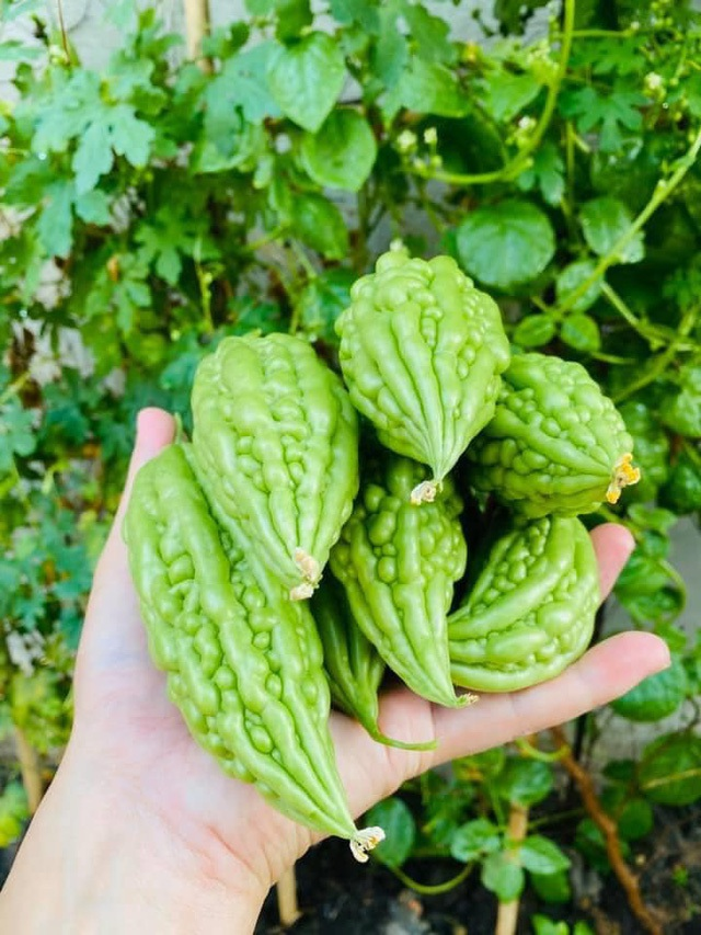 Vườn rau, trái cây xanh mướt mát của gia đình Hải Băng - Thành Đạt - 11