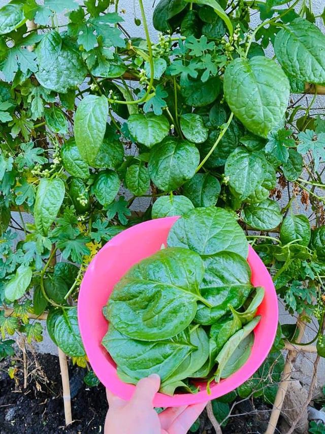 Vườn rau, trái cây xanh mướt mát của gia đình Hải Băng - Thành Đạt - 6