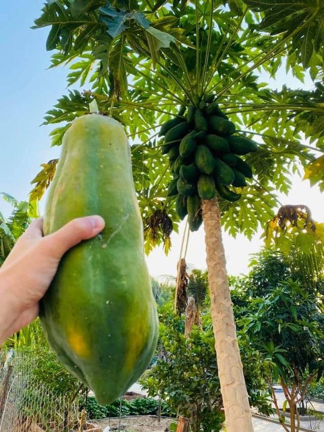 Vườn rau, trái cây xanh mướt mát của gia đình Hải Băng - Thành Đạt - 13