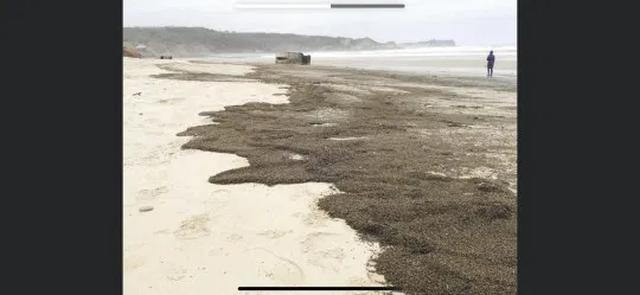 Bí ẩn hàng triệu con bọ phủ kín bãi biển - 3