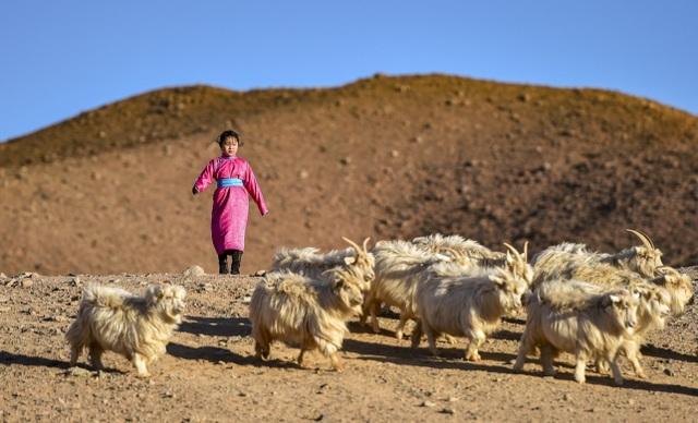 Cha mẹ chở con gái đi khắp hoang mạc tìm sóng di động để học trực tuyến - 12