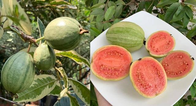Ngất ngây với vườn cây trái trĩu quả của ca sĩ Mỹ Lệ - 11