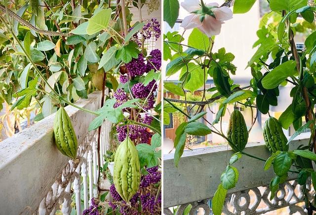 Ngất ngây với vườn cây trái trĩu quả của ca sĩ Mỹ Lệ - 6