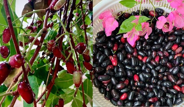 Ngất ngây với vườn cây trái trĩu quả của ca sĩ Mỹ Lệ - 3