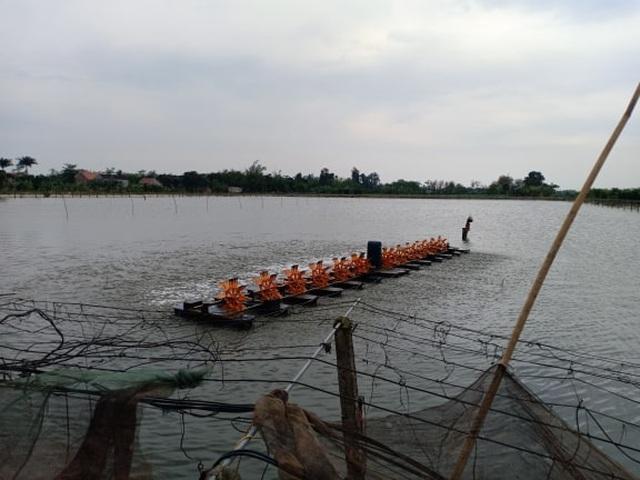 Nam Định: Chỉ huy 2 triệu con chạch đồng bằng tràng vỗ tay - 5
