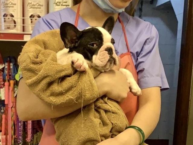 Dịch vụ đón thú cưng đi tắm, giải khuây cho chó mèo đắt hàng mùa dịch - 1