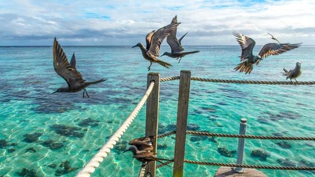 Các loài chim biển tìm thức ăn trên biển như thế nào? - 1