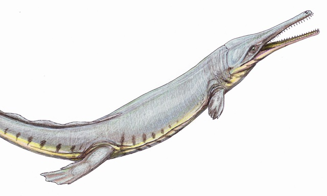 Cá sấu cổ xưa có hình dáng giống cá heo và cá voi - 1