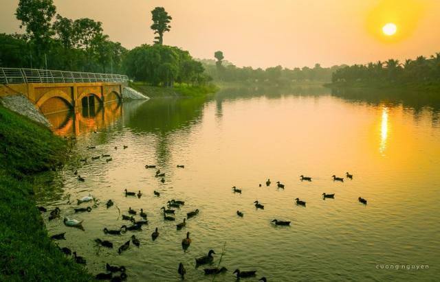 Khu đô thị tại Việt Nam có thiên nga, vịt trời đi lại tự nhiên trên đường như châu Âu - 2
