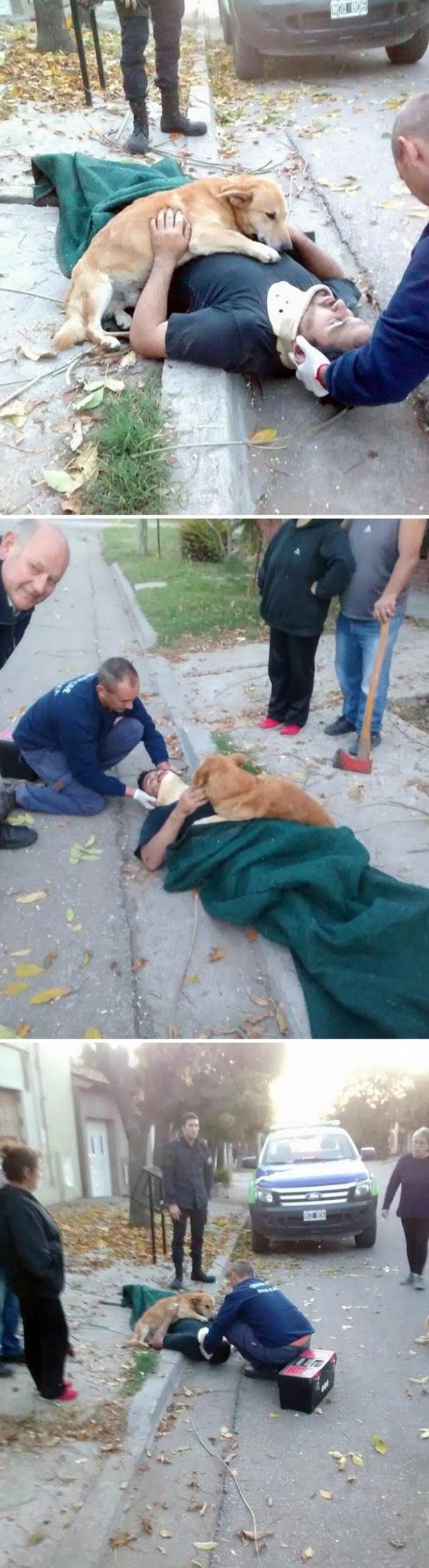 Cảm động tình yêu vô điều kiện của cún cưng dành cho chủ - 2