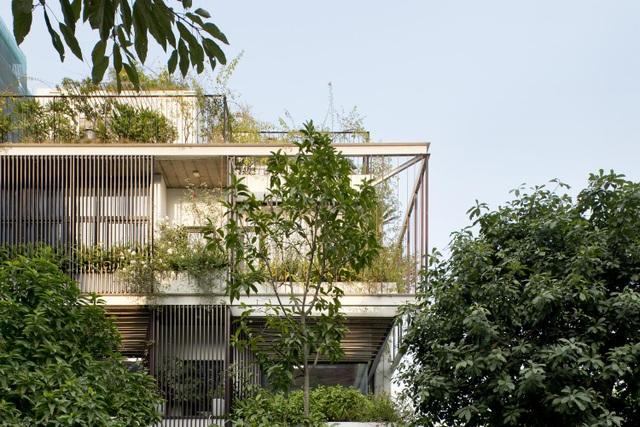 Hà Nội: Biệt thự 3 tầng phủ kín cây xanh đẹp lạ giữa lòng phố cổ - 3