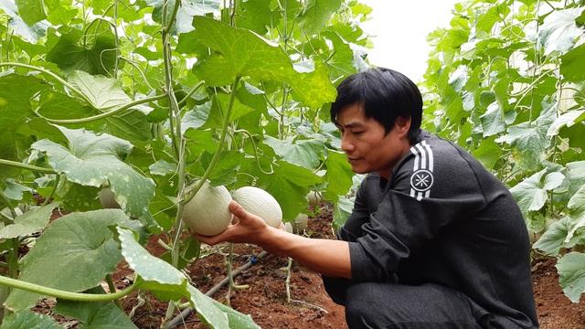Thạc sĩ từ nước ngoài về trồng dưa lưới thu hàng trăm triệu đồng mỗi năm - 1