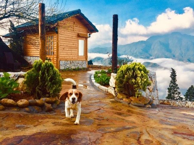 Đẹp hút hồn ngôi nhà gỗ săn mây vạn người mê trên núi cao ở Sa Pa - 2
