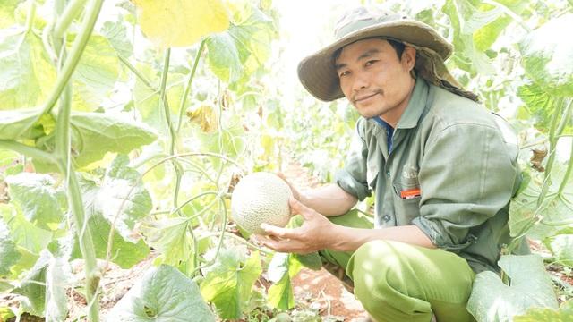 Thạc sĩ từ nước ngoài về trồng dưa lưới thu hàng trăm triệu đồng mỗi năm - 6