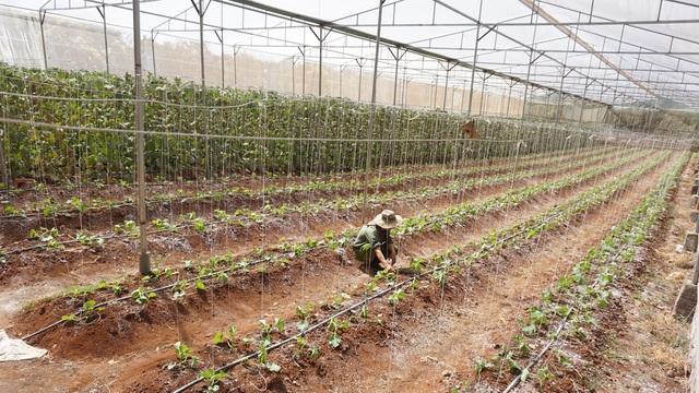 Thạc sĩ từ nước ngoài về trồng dưa lưới thu hàng trăm triệu đồng mỗi năm - 3