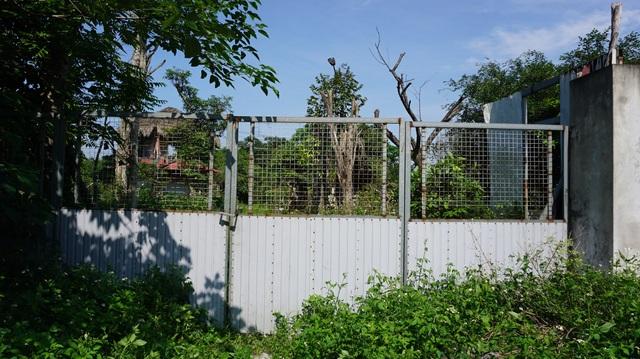 Khu vườn bỏ hoang toàn siêu cây bạc tỷ của đại gia nức tiếng một thời - 1