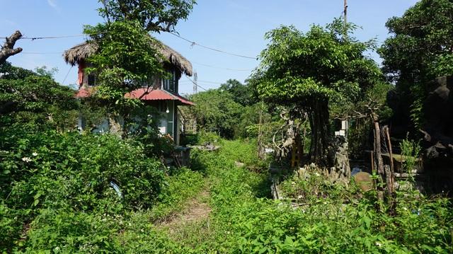 Khu vườn bỏ hoang toàn siêu cây bạc tỷ của đại gia nức tiếng một thời - 2