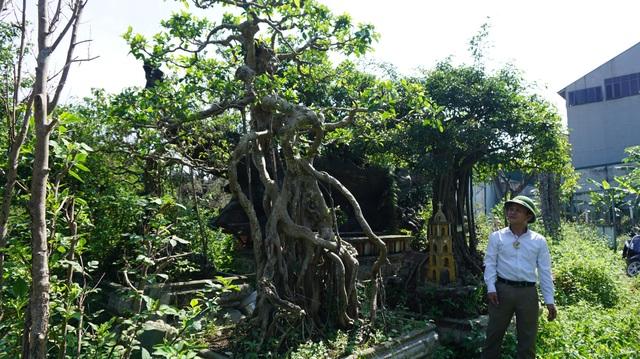 Khu vườn bỏ hoang toàn siêu cây bạc tỷ của đại gia nức tiếng một thời - 11