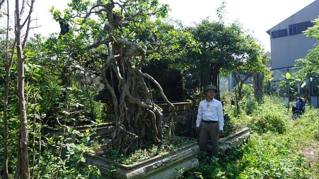Khu vườn bỏ hoang toàn siêu cây bạc tỷ của đại gia nức tiếng một thời - 13