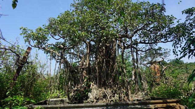 Khu vườn bỏ hoang toàn siêu cây bạc tỷ của đại gia nức tiếng một thời - 15