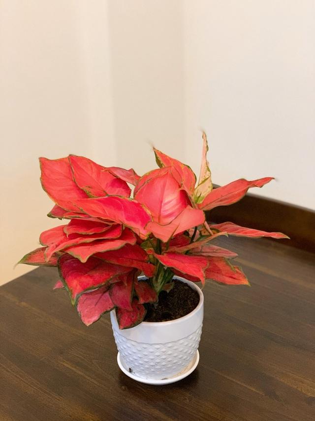 Ngắm ban công đầy hoa trong căn hộ của vợ chồng MC Hoàng Linh - 6
