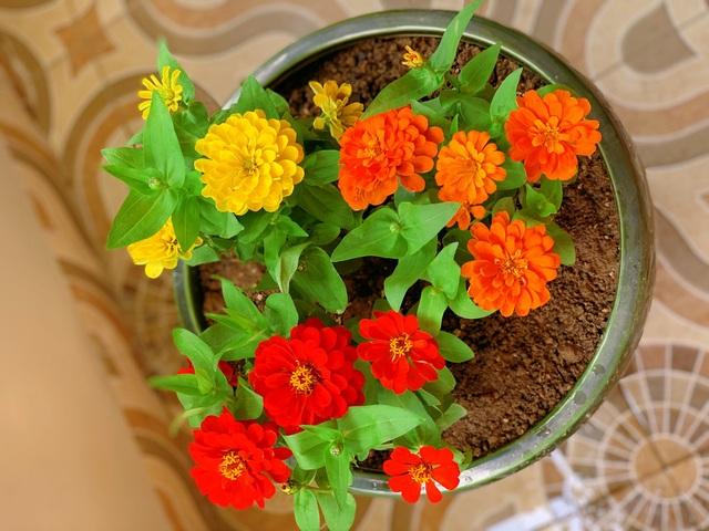 Ngắm ban công đầy hoa trong căn hộ của vợ chồng MC Hoàng Linh - 7