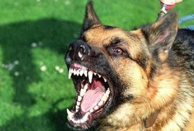 Bé trai 7 tuổi tử vong nghi bị chó dại cắn  từ trước - 1
