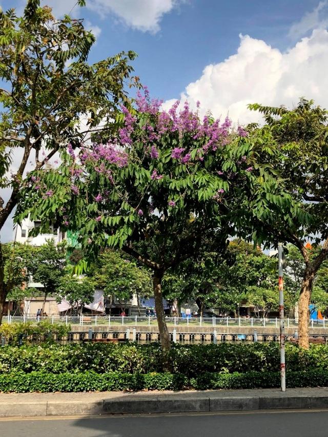 Một Sài Gòn dịu dàng trong sắc tím - 3