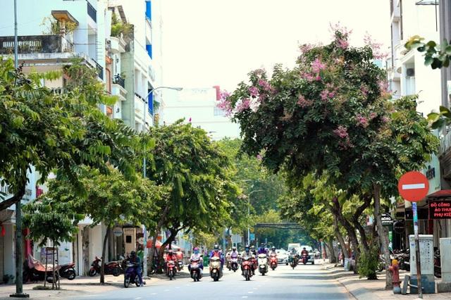 Một Sài Gòn dịu dàng trong sắc tím - 5