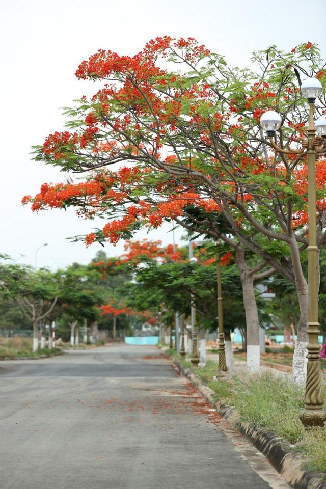 Một Sài Gòn dịu dàng trong sắc tím - 9