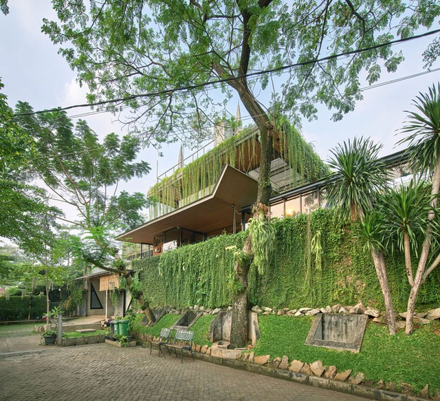 Ngôi nhà phủ kín cây xanh như bước ra từ câu chuyện cổ tích - 1