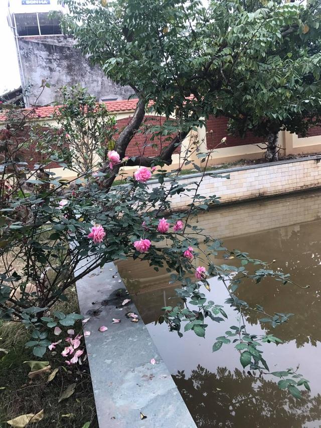 Cận cảnh nhà cổ trăm tuổi toàn bằng gỗ quý, đẹp hiếm có ở Nam Định - 11