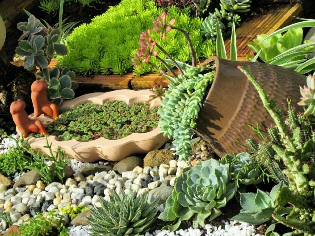 Độc đáo khu vườn ve chai của chị gái Lâm Đồng - 13