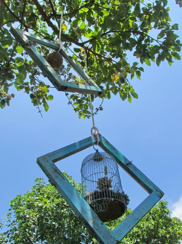 Độc đáo khu vườn ve chai của chị gái Lâm Đồng - 2