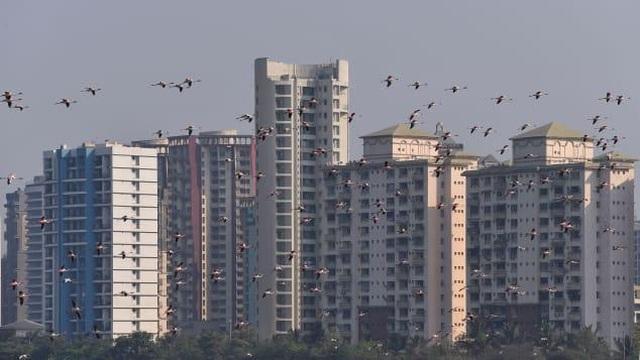 Chim hồng hạc đổ về Mumbai trong thời gian Ấn Độ thực hiện giãn cách xã hội - 1