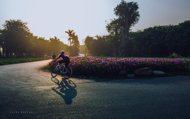 Check-in cánh đồng cỏ tranh đẹp nên thơ ngay phía Đông Hà Nội - 14