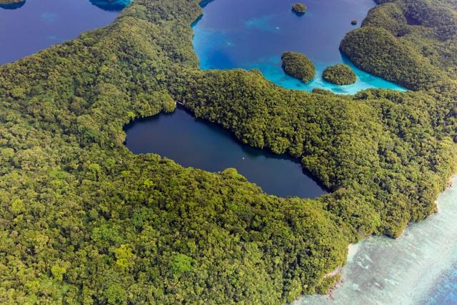 Bí ẩn hồ nước chứa hàng triệu con sứa biển - 1