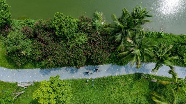 Check-in cánh đồng cỏ tranh đẹp nên thơ ngay phía Đông Hà Nội - 15