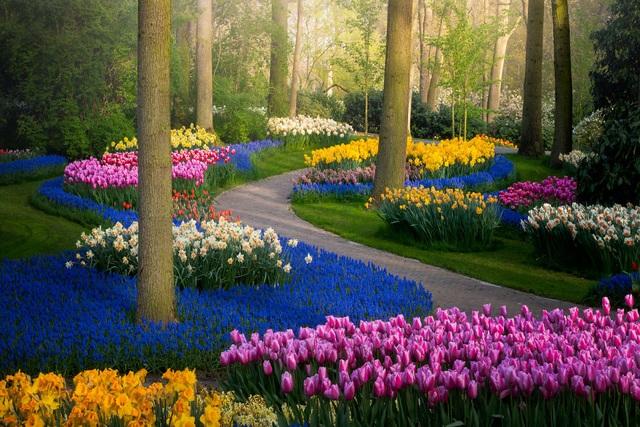 Mãn nhãn với vườn hoa đẹp nhất thế giới - 1