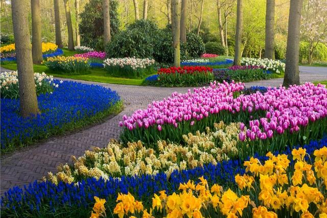 Mãn nhãn với vườn hoa đẹp nhất thế giới - 10