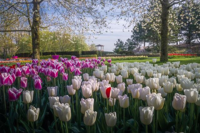 Mãn nhãn với vườn hoa đẹp nhất thế giới - 12