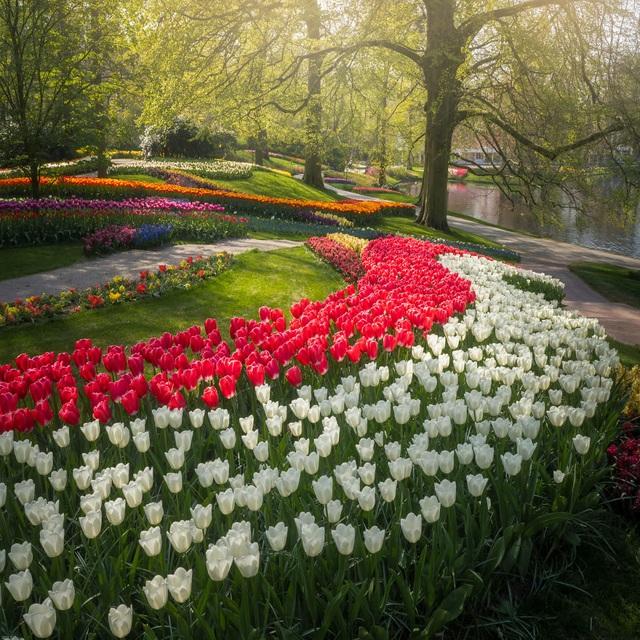 Mãn nhãn với vườn hoa đẹp nhất thế giới - 14