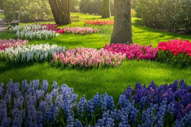 Mãn nhãn với vườn hoa đẹp nhất thế giới - 15