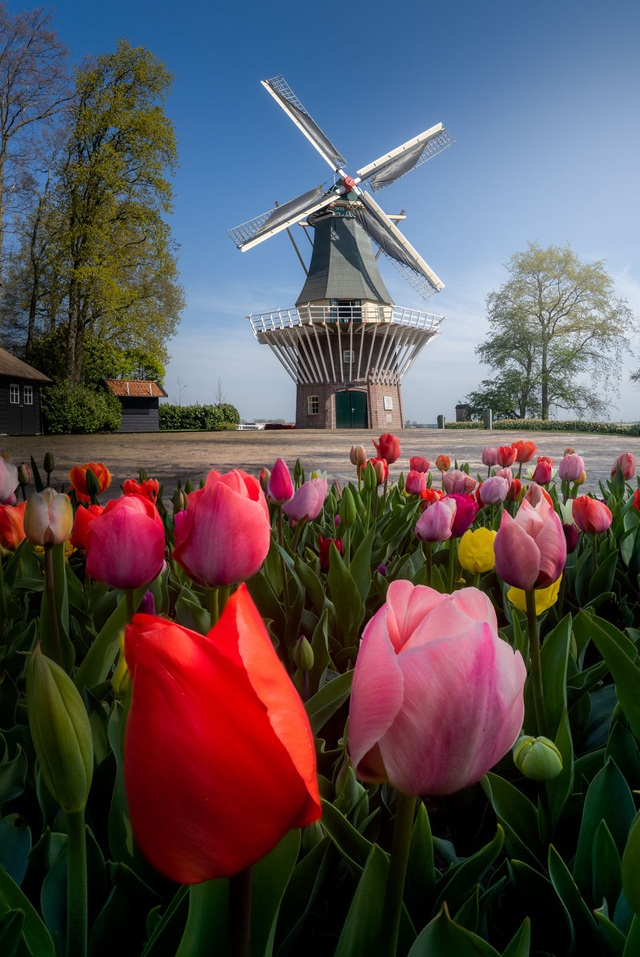 Mãn nhãn với vườn hoa đẹp nhất thế giới - 2