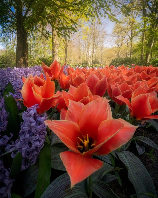 Mãn nhãn với vườn hoa đẹp nhất thế giới - 3