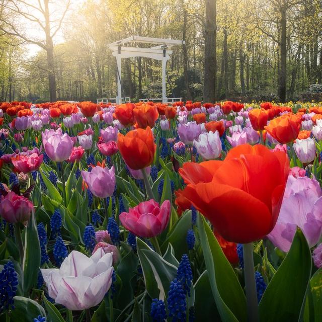 Mãn nhãn với vườn hoa đẹp nhất thế giới - 5