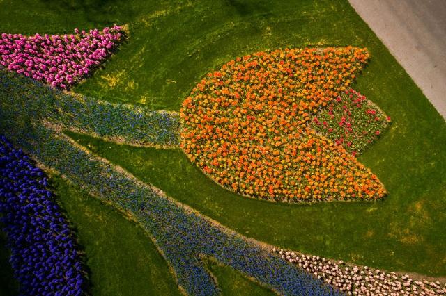 Mãn nhãn với vườn hoa đẹp nhất thế giới - 6