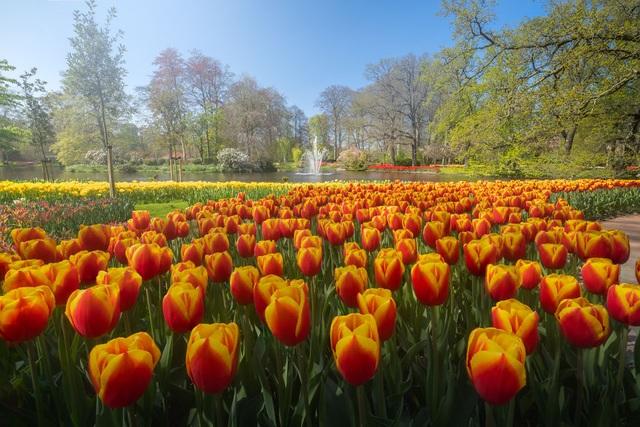 Mãn nhãn với vườn hoa đẹp nhất thế giới - 7